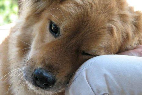 pies-moj-przyjaciel-2-218557dab0,465,310,1,0